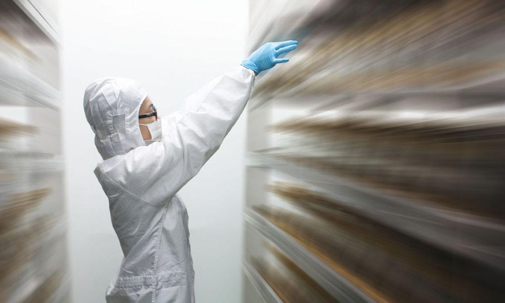 高效固態培養牛樟芝菌絲體技術